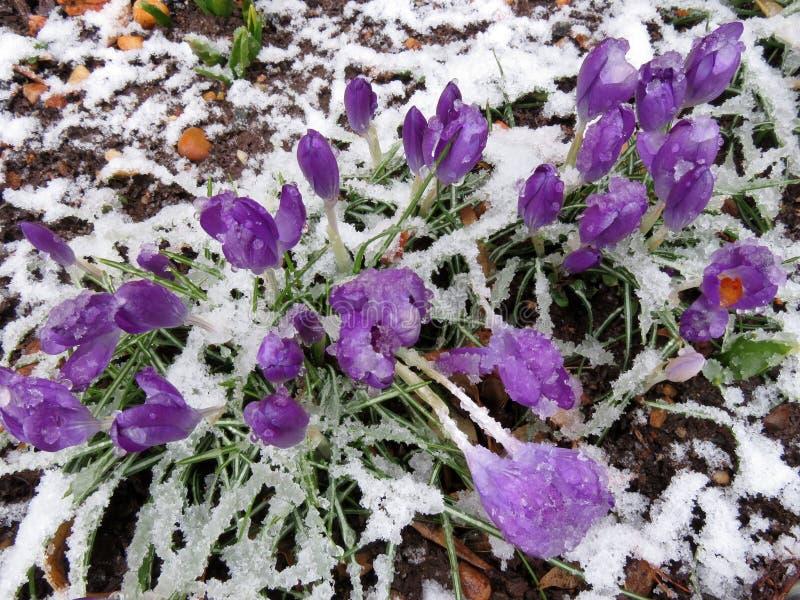 Cogido por la tormenta de la nieve imagen de archivo