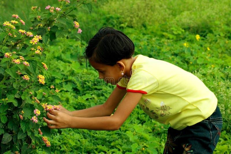 Coglitura dei fiori selvaggi fotografia stock