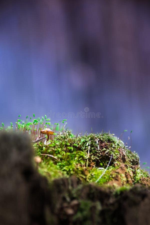 cogumelo foto de stock royalty free