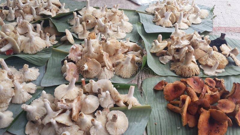 Cogumelo da floresta na montanha fotos de stock royalty free