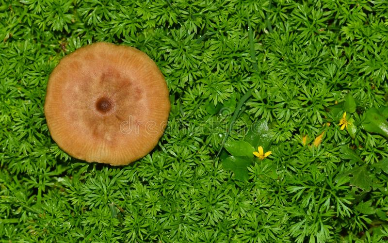 Cogumelo de Brown na vegetação rasteira luxúria fotos de stock