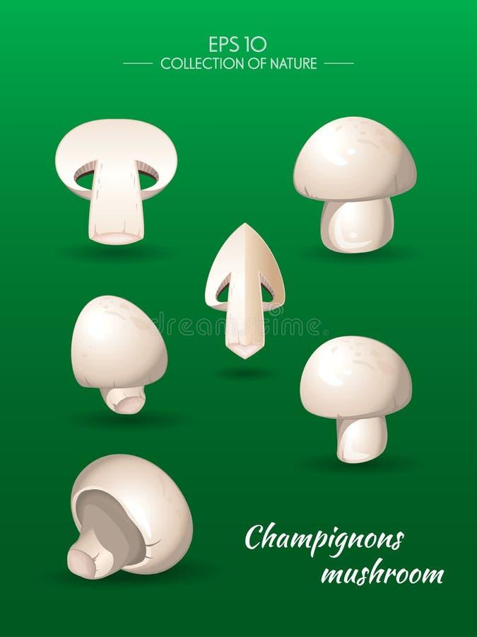 Cogumelo de campo Cogumelos ilustração stock