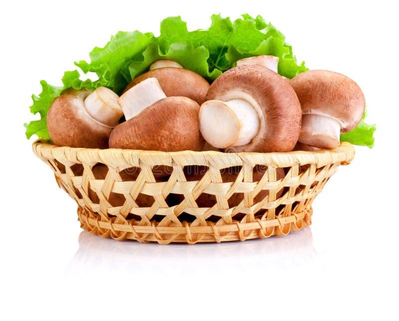 Cogumelo de campo fresco na cesta e folhas da salada verde isoladas imagens de stock