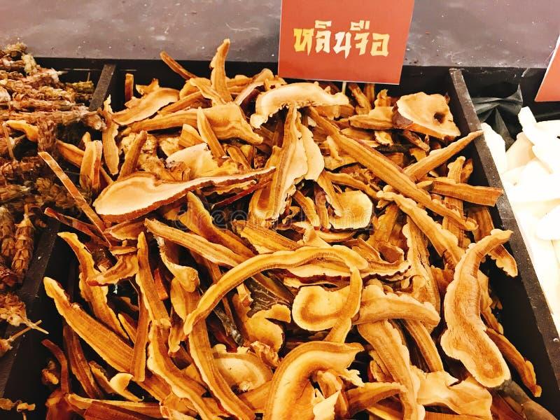 Cogumelo de Lingzhi ou lucidum de Ganoderma ou tsugae de Ganoderma ou lingzhi de Ganoderma ou chih secado de Ling fotos de stock royalty free