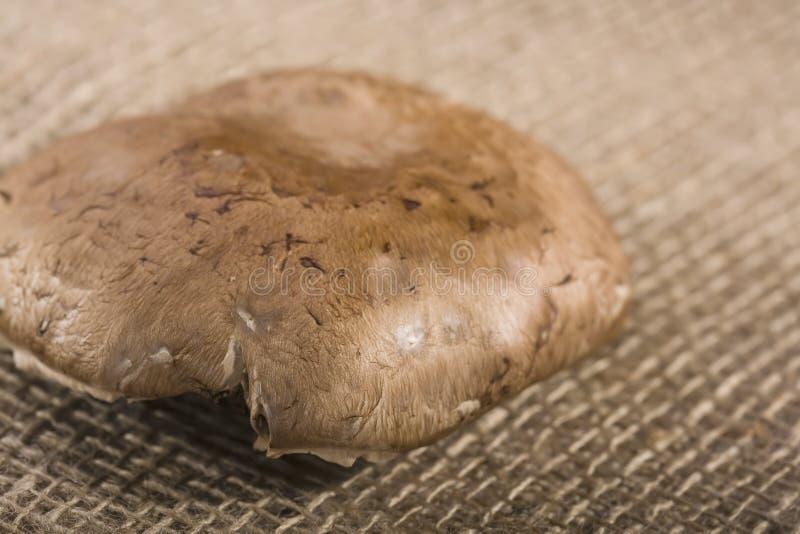 Download Cogumelo de Portabello imagem de stock. Imagem de delicioso - 12805485
