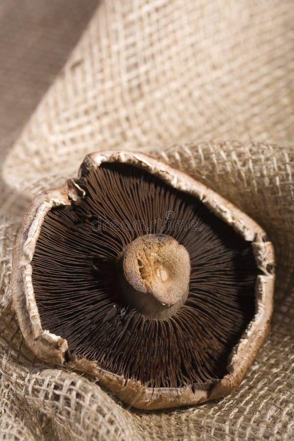 Download Cogumelo de Portabello foto de stock. Imagem de nutritious - 12805548