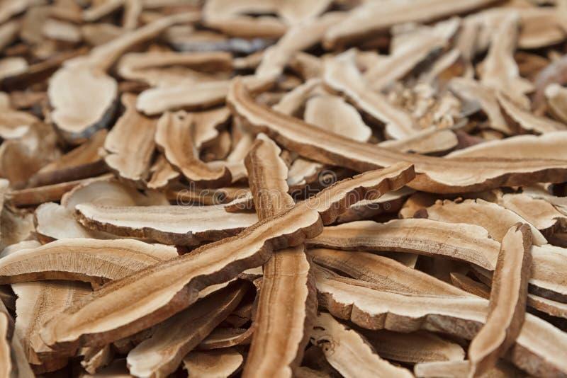 Cogumelo de Reishi, cogumelo seco imagens de stock royalty free