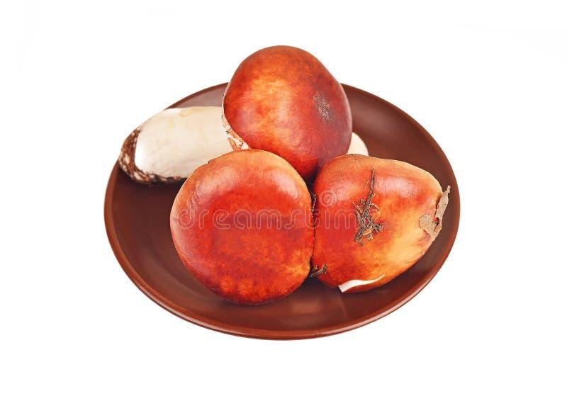 Cogumelo do cepa-de-bordéus na placa da argila imagem de stock royalty free