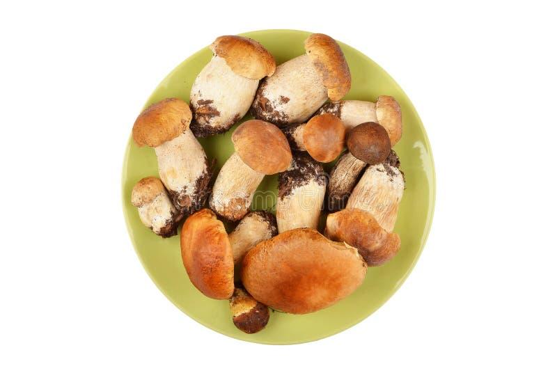 Cogumelo do cepa-de-bordéus na placa da argila fotos de stock royalty free
