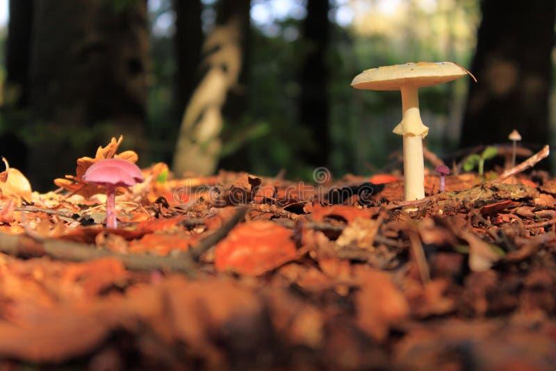 Cogumelo do outono fotos de stock