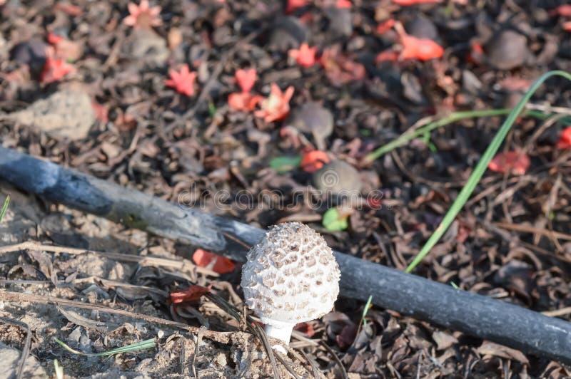 cogumelo e belo fundo imagem de stock