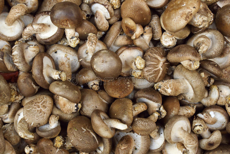 Cogumelo fresco foto de stock