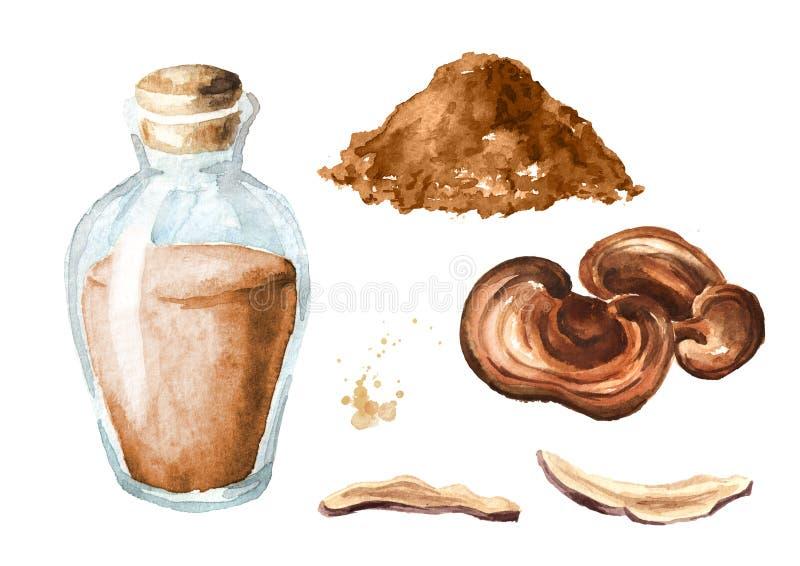 Cogumelo secado do lucidum do ganoderma de Reishi com pó e grupo da tintura Superfood Ilustração tirada mão da aquarela, isolada  ilustração stock