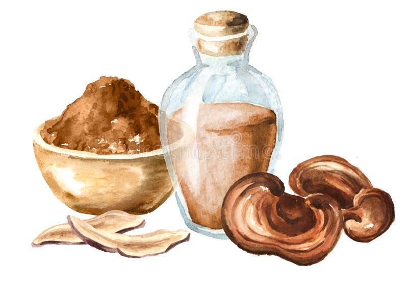 Cogumelo secado do lucidum do ganoderma de Reishi com pó e tintura Superfood Ilustração tirada mão da aquarela, isolada no whit ilustração stock