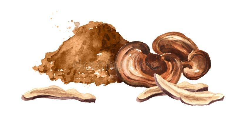 Cogumelo secado do lucidum do ganoderma de Reishi com pó Ilustração tirada mão da aquarela isolada no fundo branco ilustração do vetor