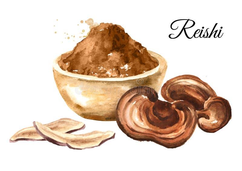 Cogumelo secado do lucidum do ganoderma de Reishi com pó Superfood Ilustração tirada mão da aquarela, isolada no fundo branco ilustração do vetor