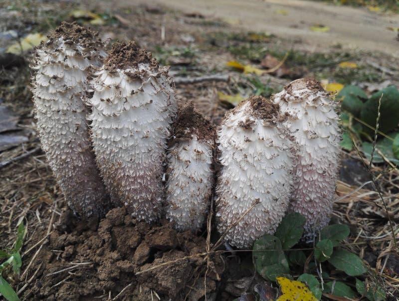 Cogumelo selvagem em uma floresta do outono fotos de stock