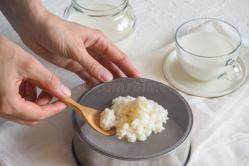 Cogumelo tibetano do leite Grões probióticos orgânicas do kefir do leite O conceito de uma dieta saudável e de reforçar o sistema imagens de stock