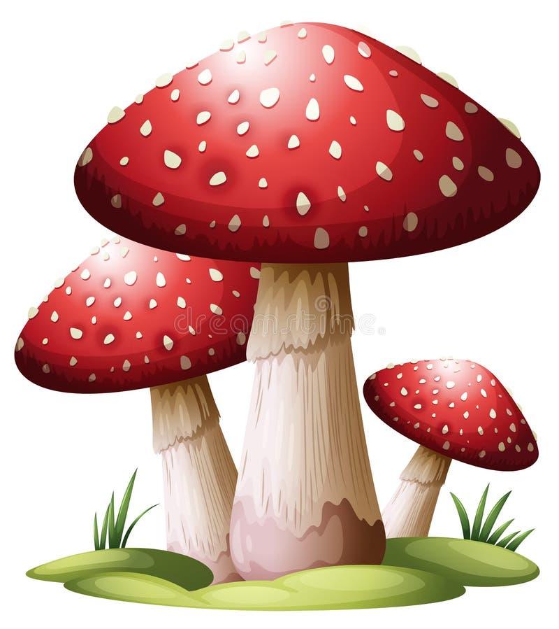 Cogumelo vermelho ilustração do vetor
