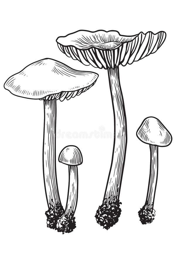 Cogumelo, vetor, desenho, gravura, ilustração, pequena, família, grupo, minúsculo ilustração royalty free