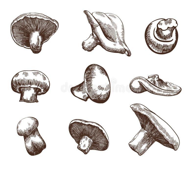 Cogumelos ilustração stock