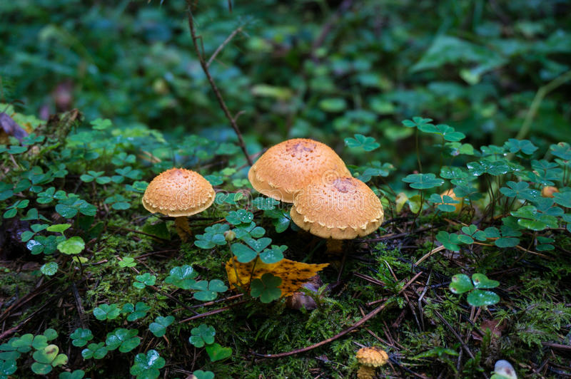 Cogumelos agradáveis na floresta fotos de stock