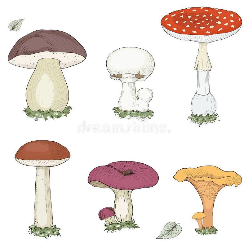 Cogumelos ajustados ilustração royalty free