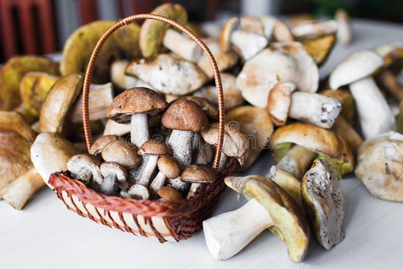 Cogumelos brancos fotografia de stock royalty free