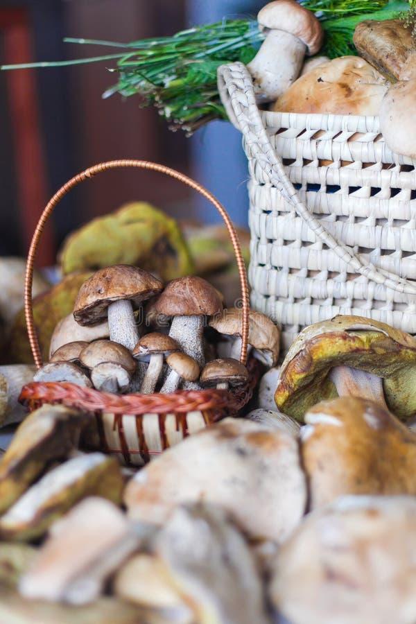 Cogumelos brancos foto de stock