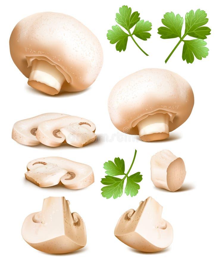 Cogumelos com salsa ilustração royalty free