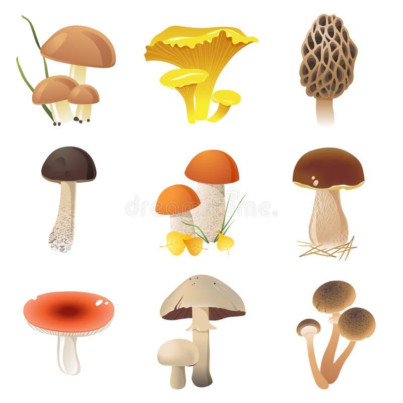 Cogumelos comestíveis ilustração royalty free