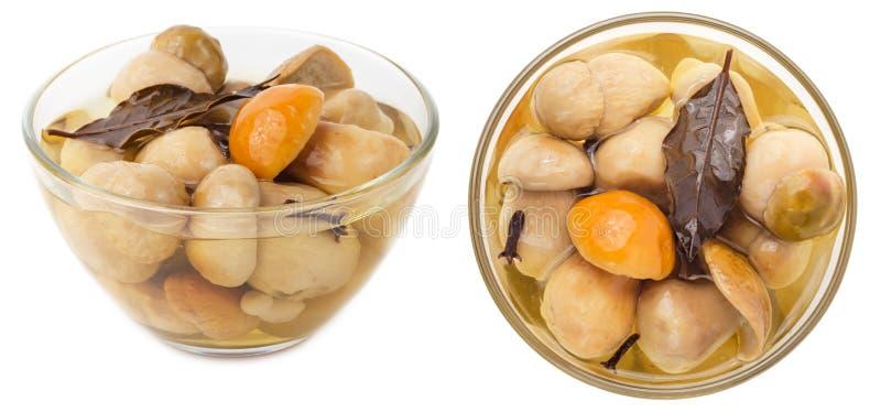 Cogumelos conservados do cepa-de-bordéus na bacia de vidro imagem de stock royalty free