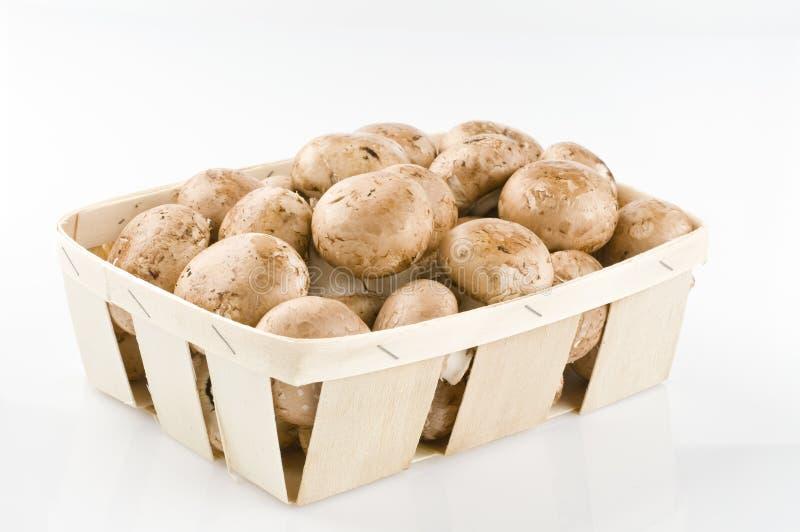 Cogumelos crus em uma cesta no branco fotografia de stock royalty free