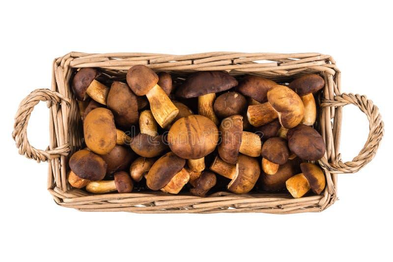 Cogumelos crus frescos do boleto na cesta de vime no fundo branco fotos de stock