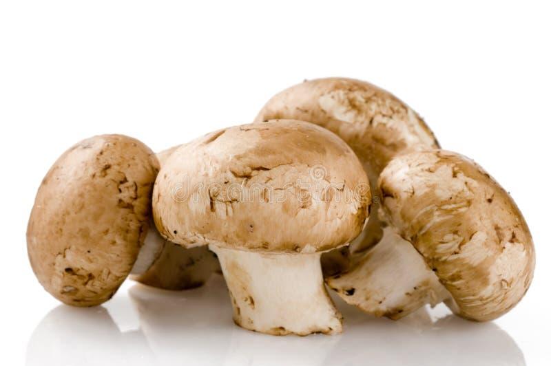Cogumelos crus frescos no branco fotos de stock royalty free