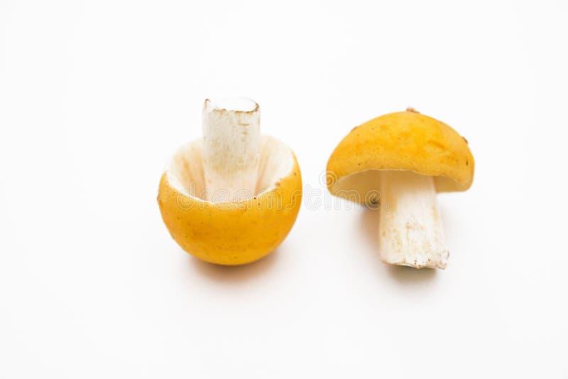 Cogumelos crus isolados no fundo branco, foco seletivo fotos de stock