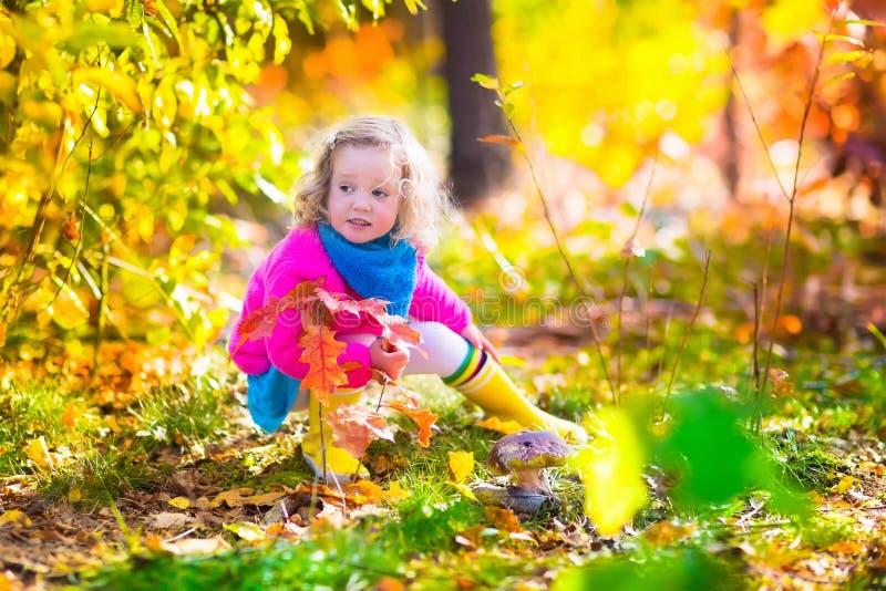 Cogumelos da colheita da menina na floresta do outono imagens de stock