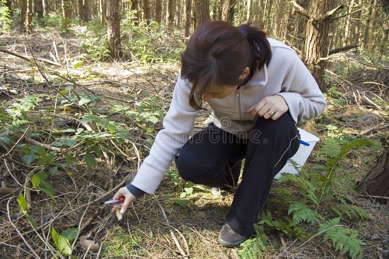 Cogumelos da colheita da mulher foto de stock royalty free