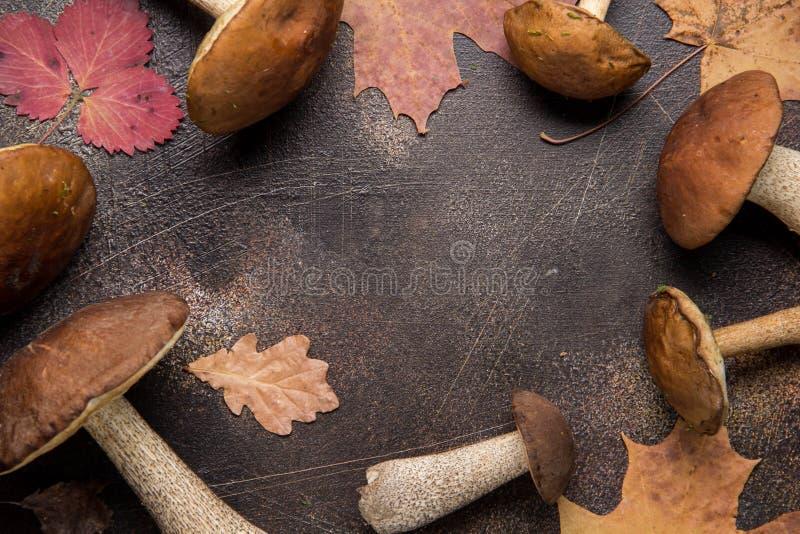 Cogumelos da floresta, colheita do outono, boleto, branco e ?lamo tremedor Cogumelos frescos crus em um fundo escuro Seque as fol fotografia de stock royalty free