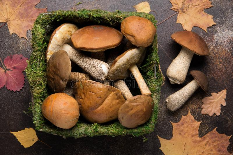 Cogumelos da floresta na cesta com musgo, colheita do outono, boleto, branco e álamo tremedor Cogumelos frescos crus em um fundo  foto de stock royalty free