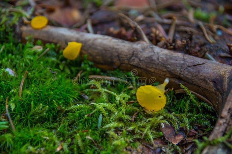 Cogumelos da geleia imagens de stock royalty free