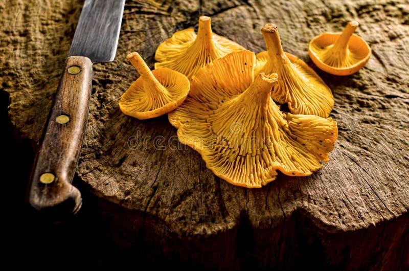 Cogumelos da prima imagem de stock