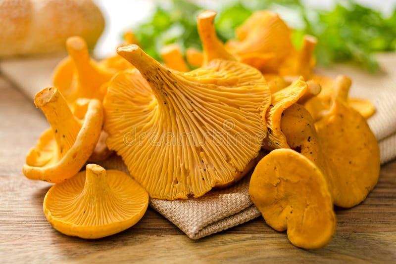 Cogumelos da prima fotografia de stock
