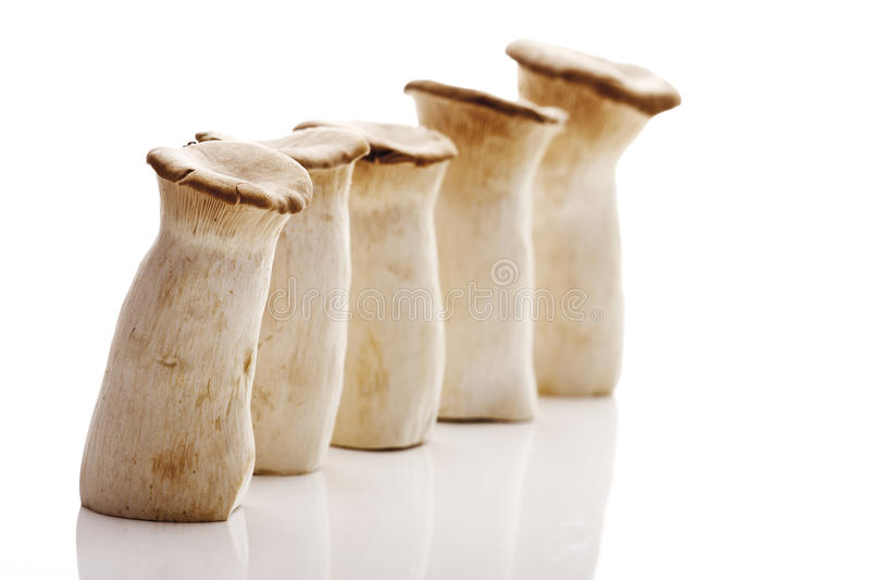 Cogumelos da trombeta do rei (eryngii do Pleurotus) fotografia de stock royalty free