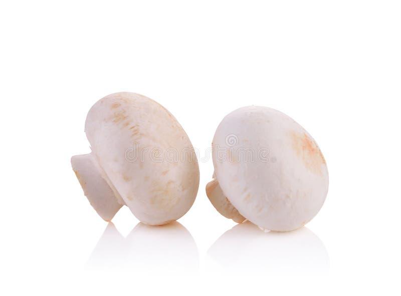 Cogumelos de botão frescos, cogumelos, no fundo branco imagens de stock