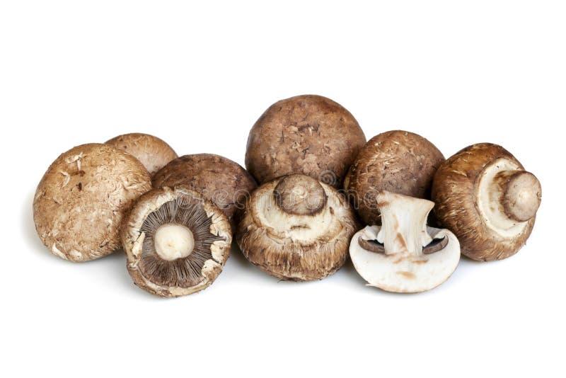 Cogumelos de Brown do suíço isolados no branco fotos de stock