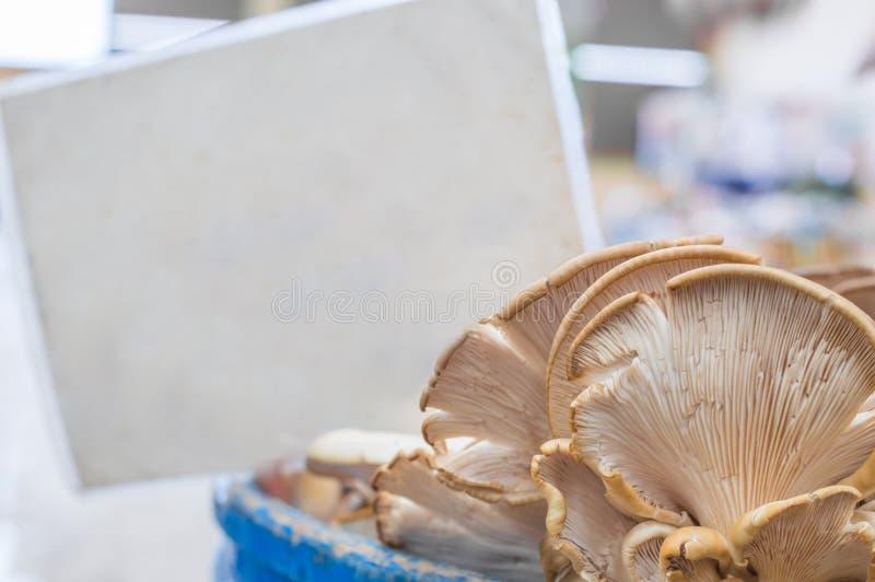 Cogumelos de ostra frescos com a etiqueta vazia obscura atrás no contador em um bazar típico do greengrocery em Turquia fotos de stock