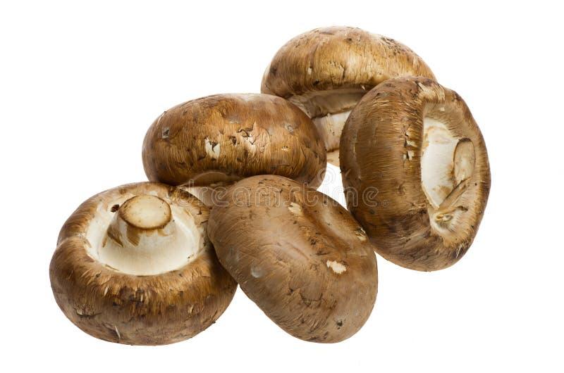 Cogumelos de Portobello isolados no branco fotos de stock royalty free