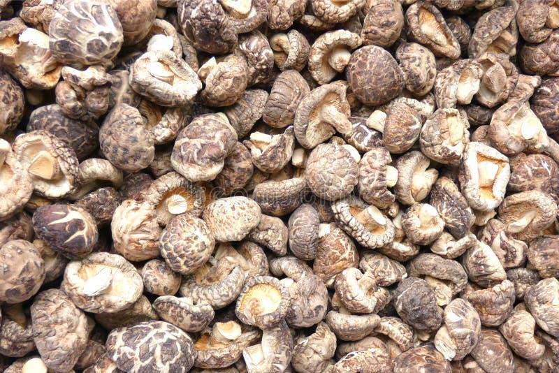 Cogumelos de Shitake imagens de stock royalty free