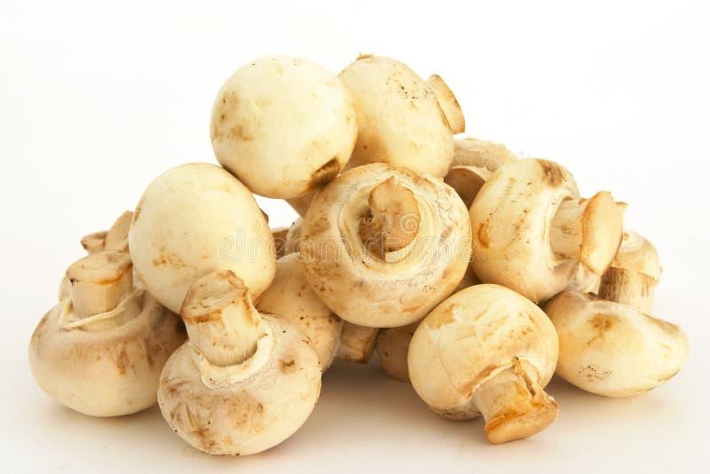 Cogumelos de tecla 3 imagem de stock royalty free